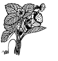 Strawberry bush vector