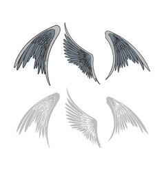 Avian wings vector