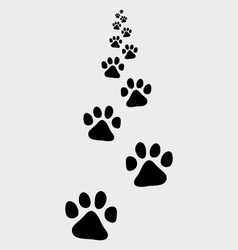Trail of dog vector
