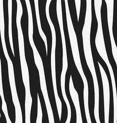 Animal print zebra texture vector