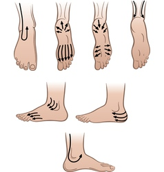 Mens feet with massaging lines vector