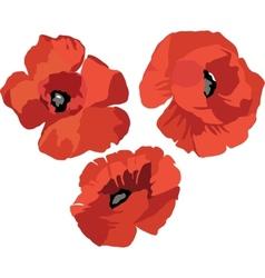 Flower poppy set vector