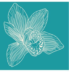 White orchid on blue background vector