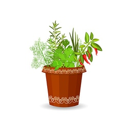 Herbs and hot pepper in a flower pot vector