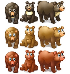 Collection of bears vector