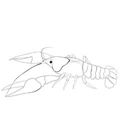 Crayfish sketch vector