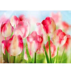 Red tulip with bokeh eps 10 vector