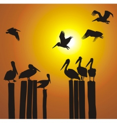 Silhouettes pelicans and sunset vector