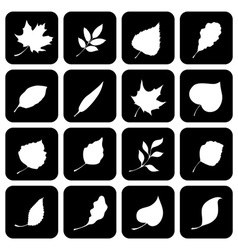 Set of square icons with various leaves vector