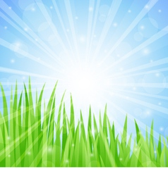 Summer abstract background with grass vector