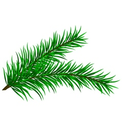 Fir branches vector