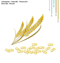 Rice with carbohydrate vitamin b9 b1 b3 vector