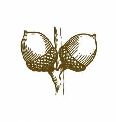 Acorns sketch vector