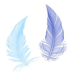 Blue birds feather vector