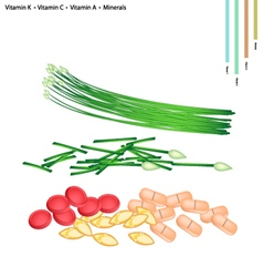 Garlic chives with vitamin k c a b9 and mineral vector