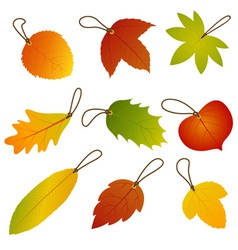 Autumn leaves hang tags vector