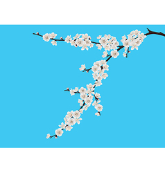 Spring blooming cherry branch vector