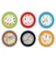 Petri dishes vector