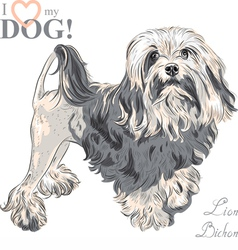 Dog breed lowchen lion bichon vector