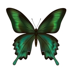 Beautiful realistic green butterfly isolated vector