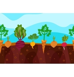 Growing vegetables vector