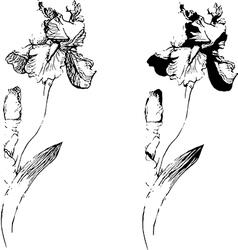 Sketch of an iris vector