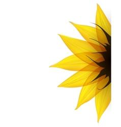 Sunflower part vector