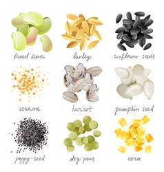 Grains seeds and beans vector