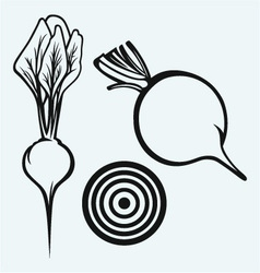 Fresh beetroot with leaves vector