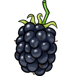 Blackberry fruit cartoon vector
