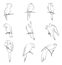 Parrot drawing set vector
