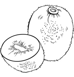 Kiwi fruit for coloring book vector