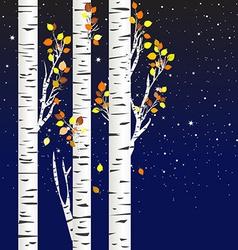 Birch trees in the autumn over a starry night vector