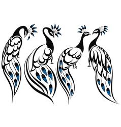 Peacocks vector