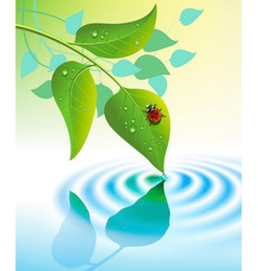 Green leaves with ladybug vector