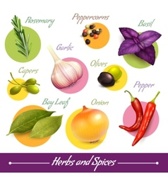 Herbs and spices set vector