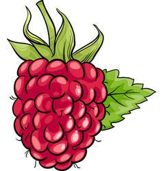 Raspberry fruit cartoon vector