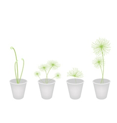Cyperus papyrus plants in a flower pot vector