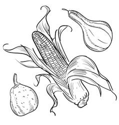 Corn sketch vector