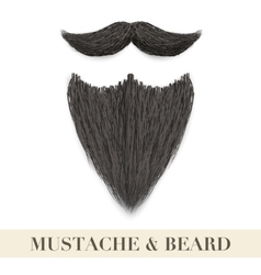 Realistic black beard with curly mustache vector