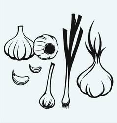 Heads of garlic vector