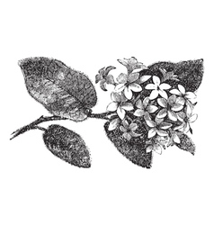 Mayflower vintage engraving vector