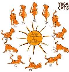 Cat doing yoga position of surya namaskara vector