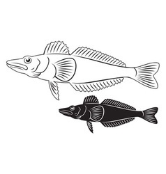 Icefish vector
