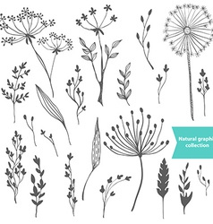 Beautiful color grass silhouette collection vector