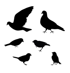 Birds silhouette on white background vector