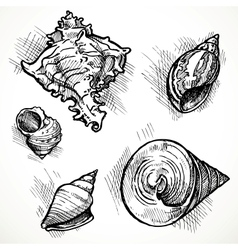 Set of sketches different shapes shell 1 vector