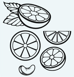Oranges fruits and slices vector