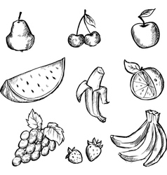 Sketch of fruits icon set vector