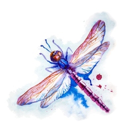 Purple watercolor dragonfly vector